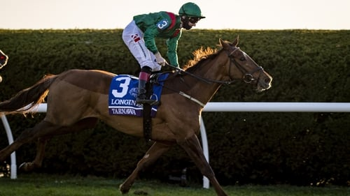 Tarnawa (pictured) and Adayar are currently disputing favouritism for Sunday's race
