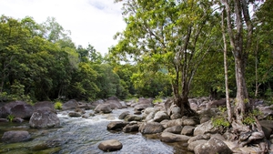 The Daintree Rainforest, listed as a World Heritage Site since 1988, has been growing for 180 million years