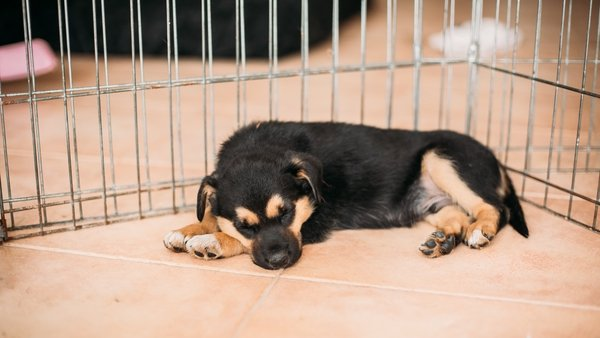Puppies were being exchanged in car parks and laybys (stock image)