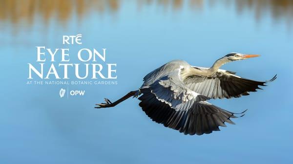RTÉ Eye on Nature
